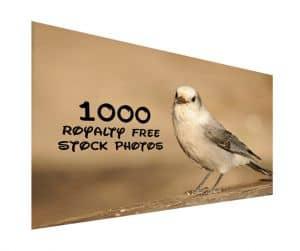 1000 Royalty Free Stock Photos runterladen