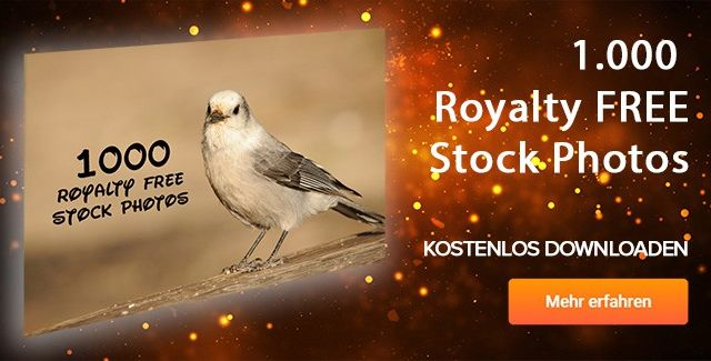 1000 Royalty Free Stock Photos gratis runterladen