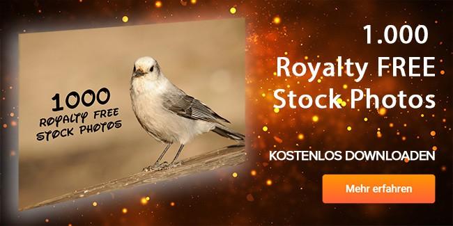 1000 Royalty Free Stock Photos gratis runterladen