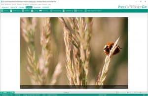 Ashampoo Photo Commander FREE gratis downloaden