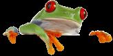 SnapFrog